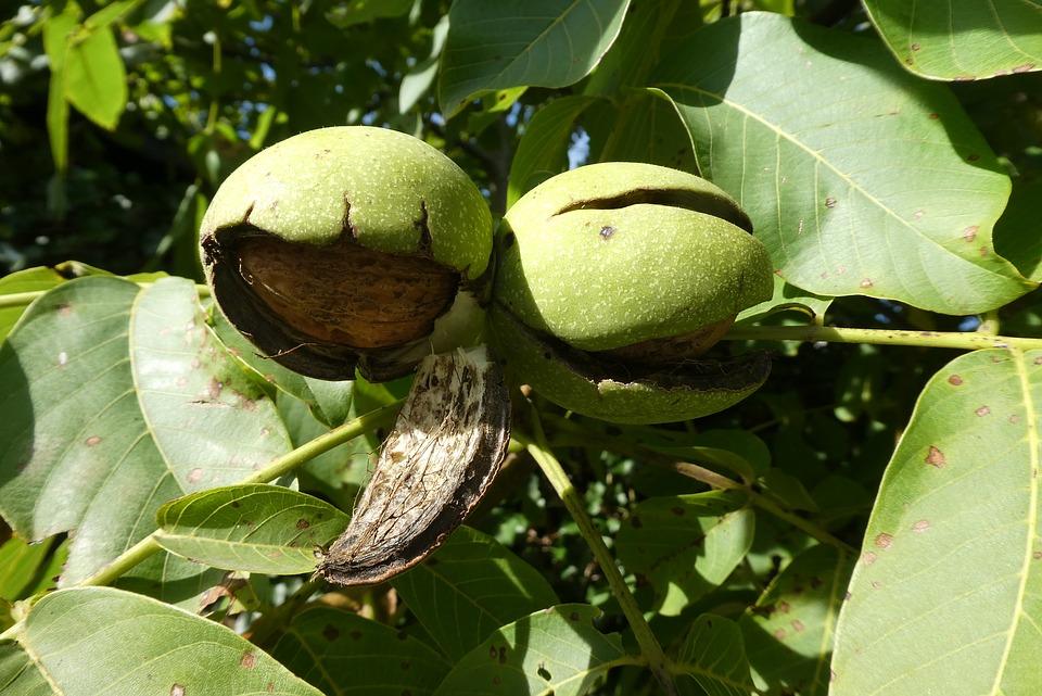walnut-3688015_960_720