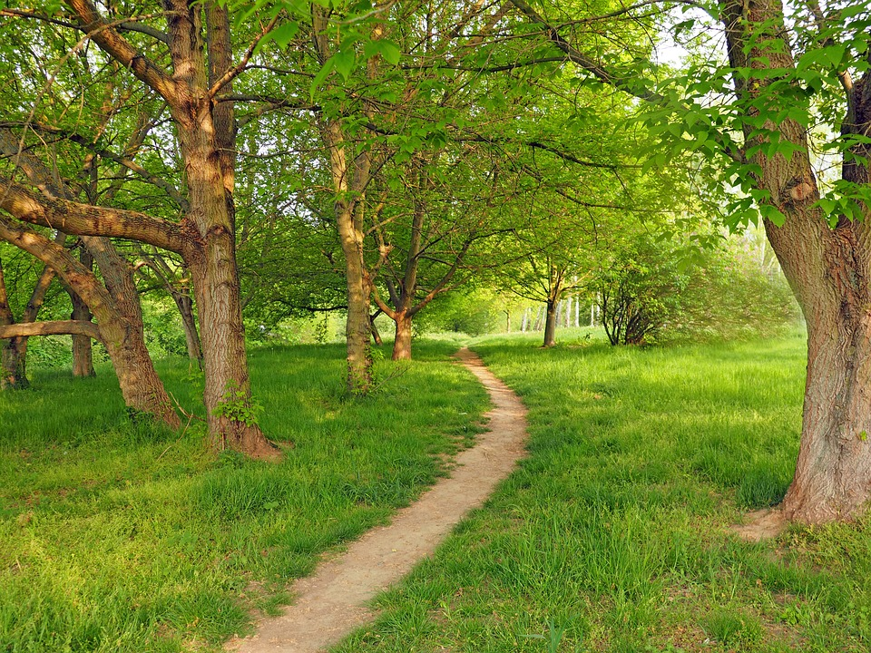 morning-grove-1374864_960_720